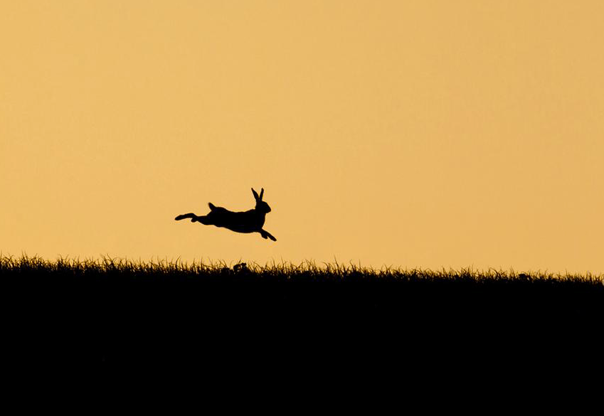 A leaping hare is outlined against a sunset sky