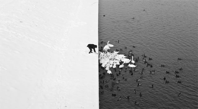 Marcin Ryczek image of a man feeding swans in the snow