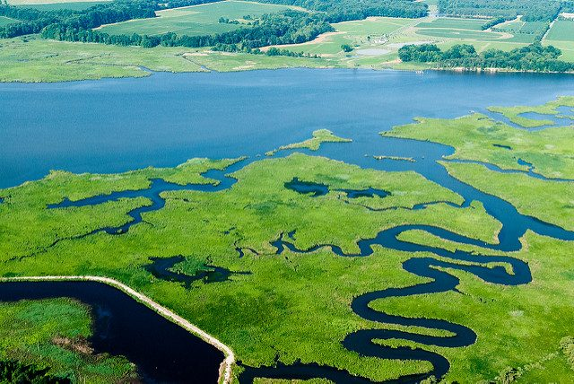 Aerial view of Choptank River with meandering tributaries cutting through greenery