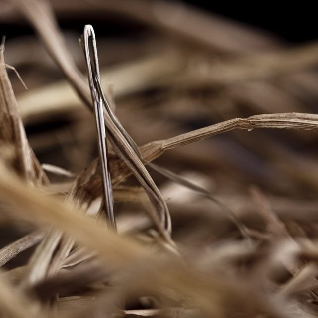 Needle in haystack by Madhavi Kuram on Flickr