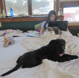 A student looks at a laptop screen while sitting up in bed with a cat and dog nearby