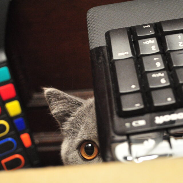 Cat peering out from under a computer keyboard