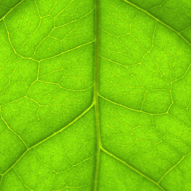 Close-up photo of a green leaf